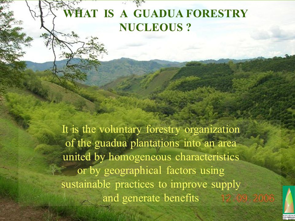 WHAT IS A GUADUA FORESTRY NUCLEOUS .