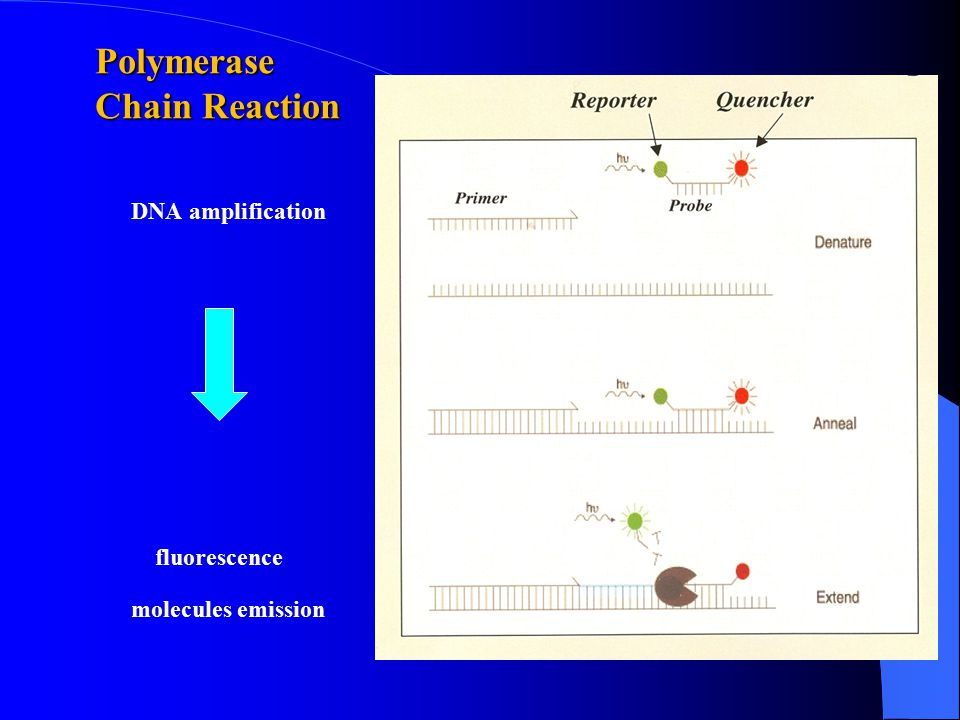 Polymerase Chain Reaction DNA amplification fluorescence molecules emission