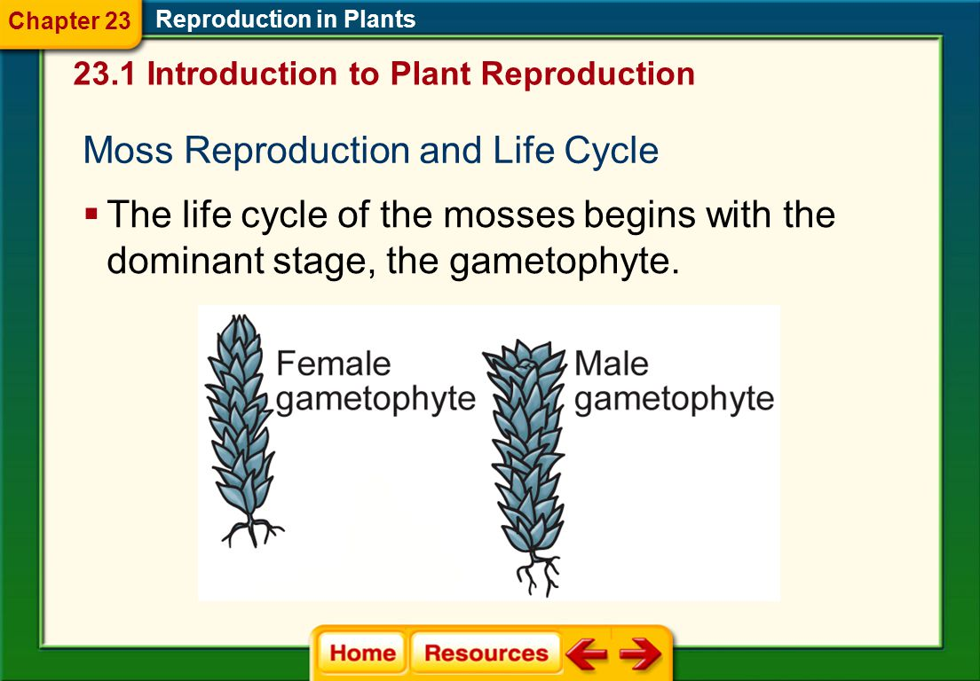  In vascular plants, the sperm may be carried by the wind, or another vector such as an insect. Reproduction in Plants  Fertilization of the egg by