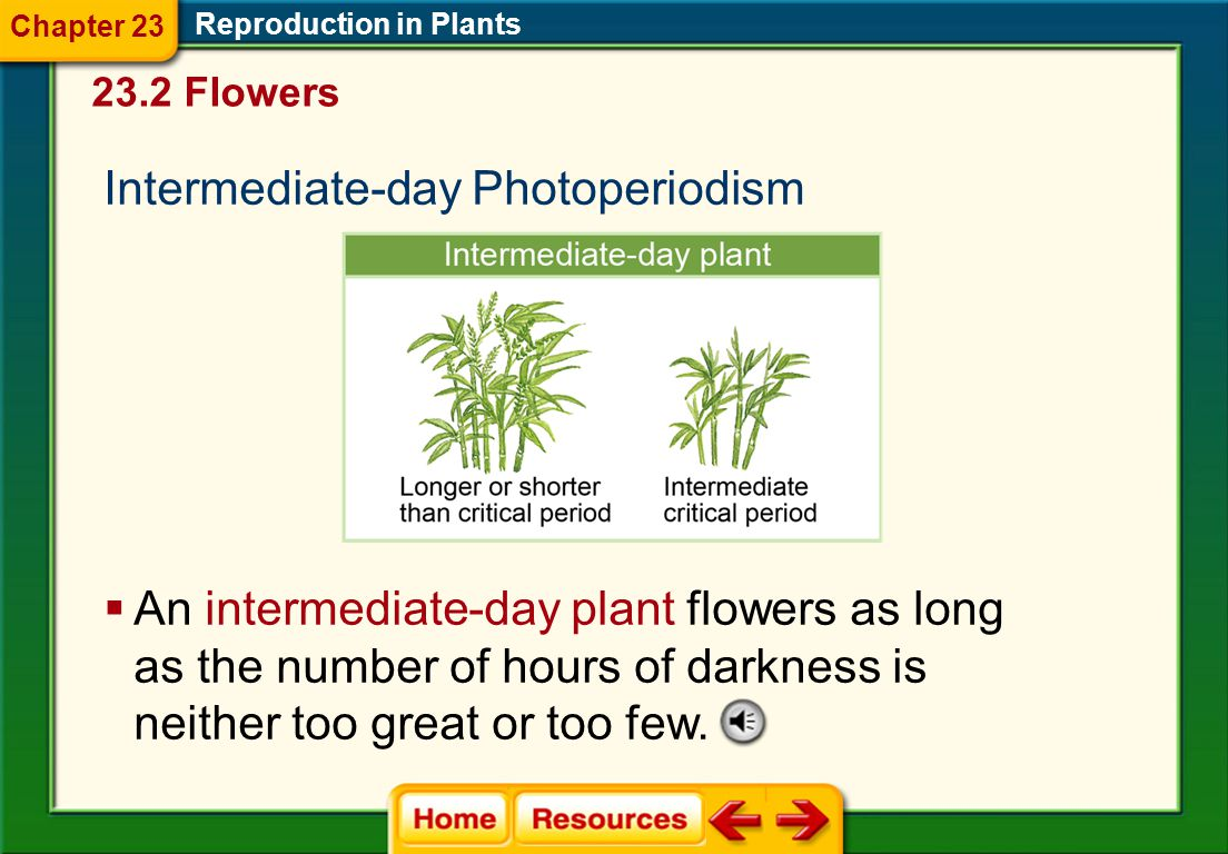 Long-day Photoperiodism Reproduction in Plants  A long-day plant flowers when the number of hours of darkness is less than its critical period. 23.2