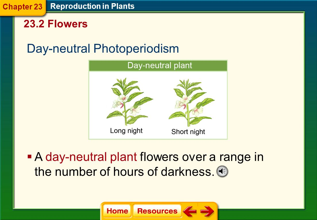 Intermediate-day Photoperiodism Reproduction in Plants  An intermediate-day plant flowers as long as the number of hours of darkness is neither too g
