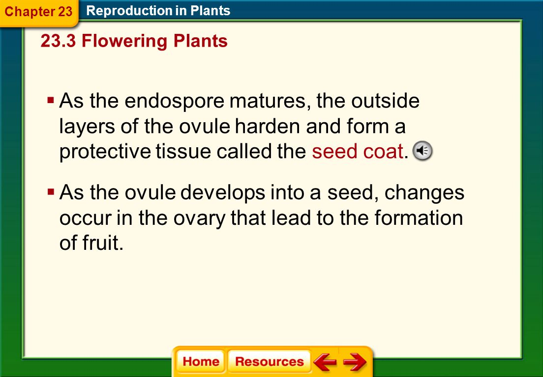 Reproduction in Plants Chapter 23