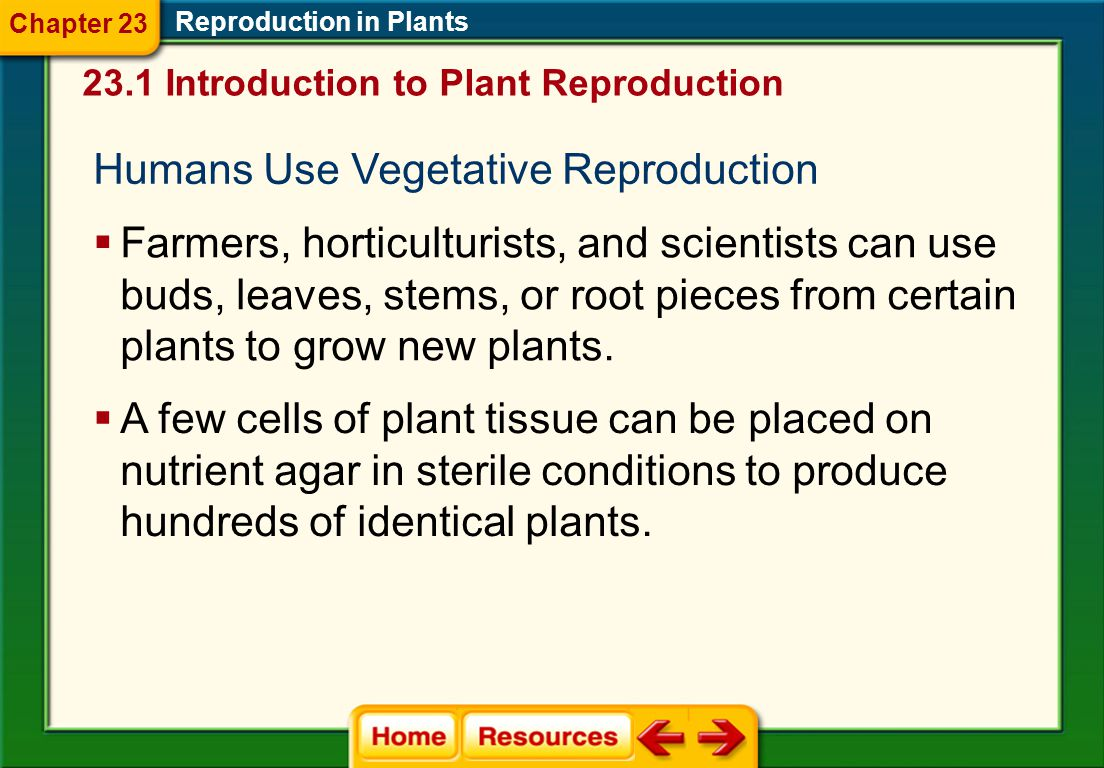 Natural Vegetative Reproduction Reproduction in Plants  When conditions are dry, some mosses dry out, break apart, and are scattered by the wind.  W