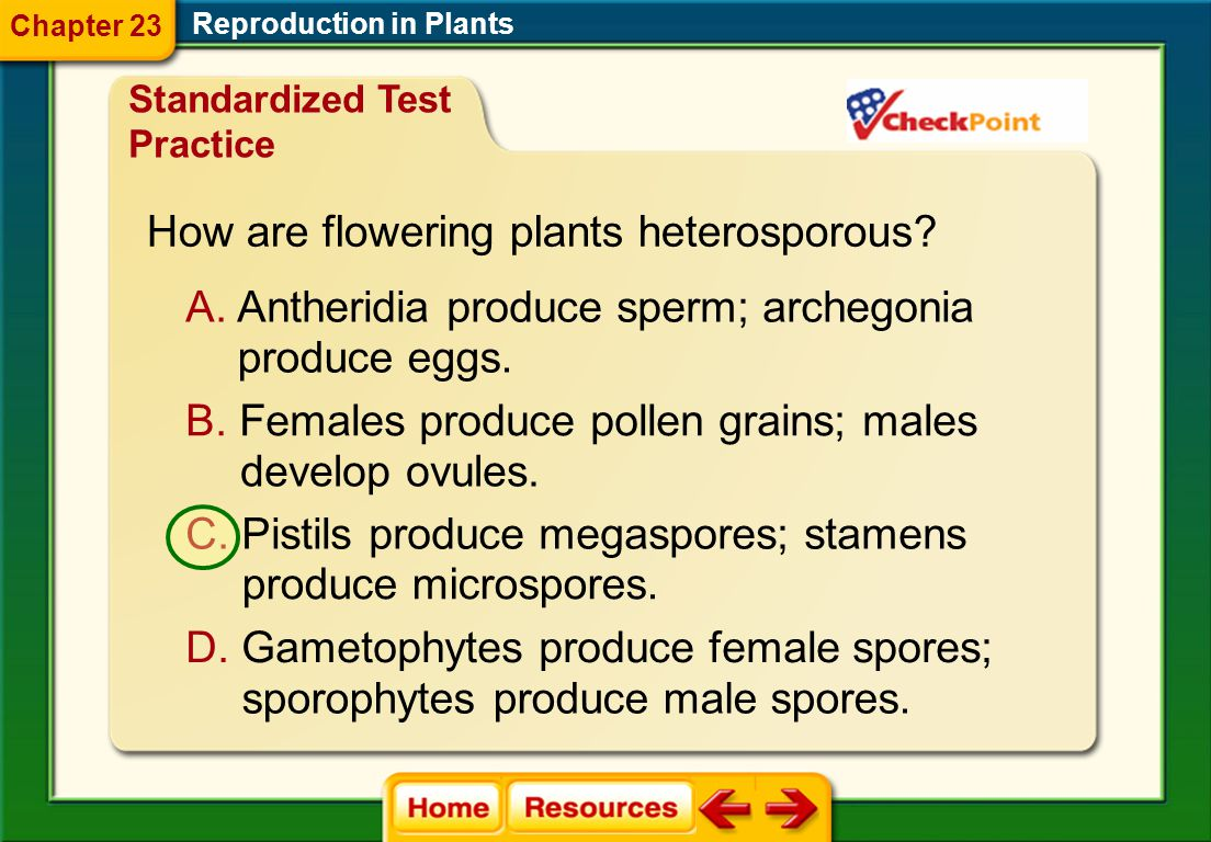 What are the first cells of the gametophyte stage? A. gametes B. spores C. zygotes D. gametophyte cells Reproduction in Plants Chapter 23 Standardized