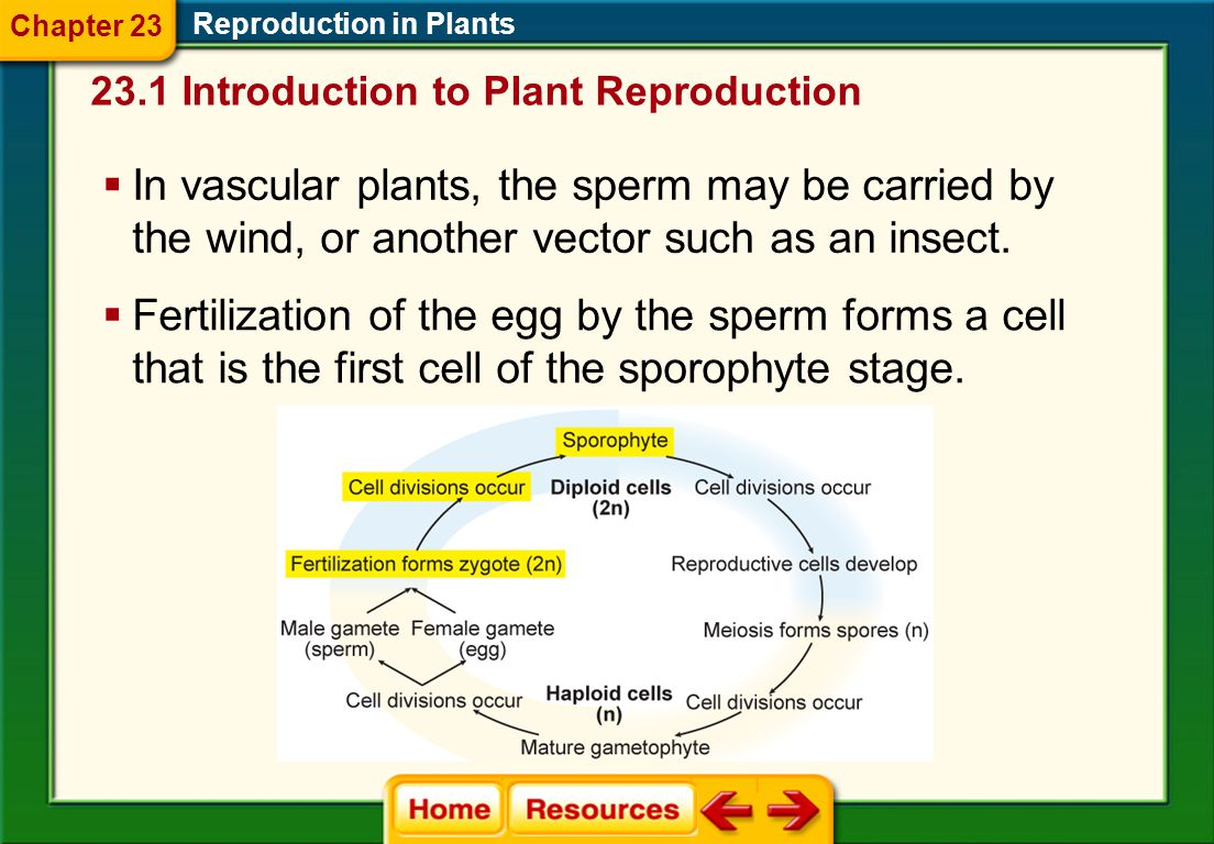  The gametophyte stage produces gametes— egg and sperm. Reproduction in Plants  In nonvascular plants, the sperm must have a small amount of water t