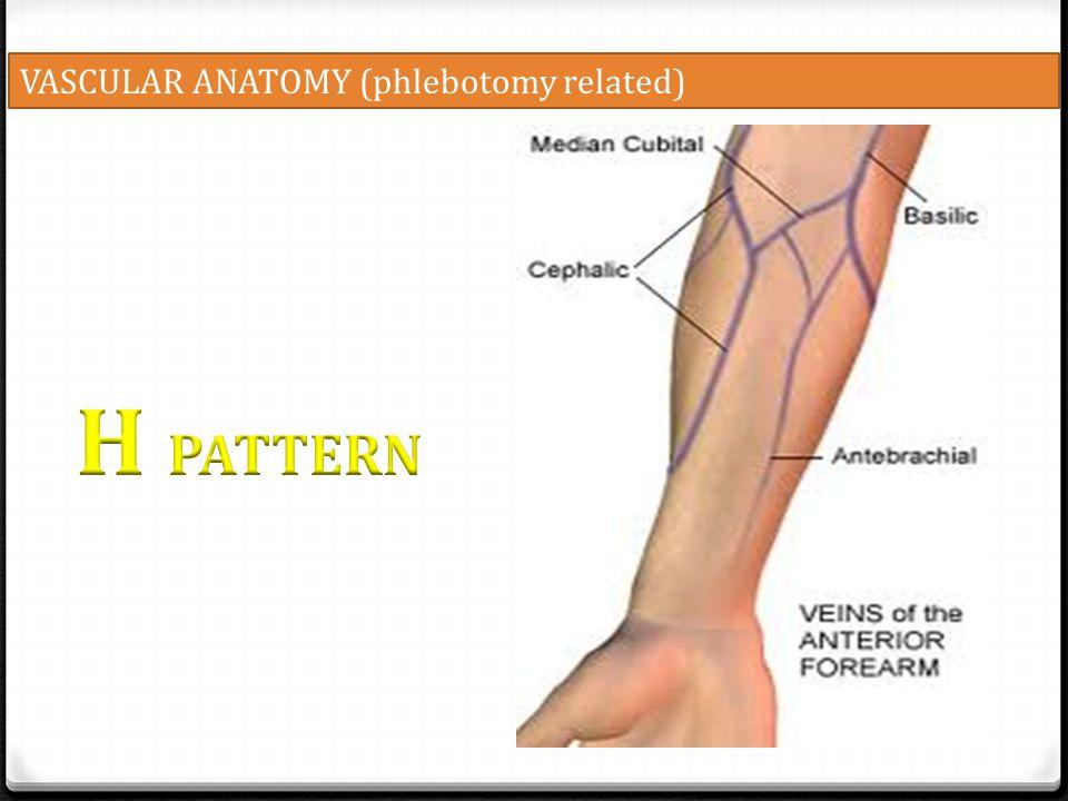VASCULAR ANATOMY (phlebotomy related)