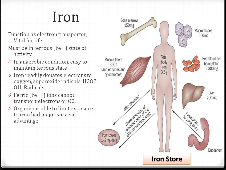 Iron Function as electron transporter; Vital for life Must be in ferrous (Fe ++ ) state of activity. 0 In anaerobic condition, easy to maintain ferrou