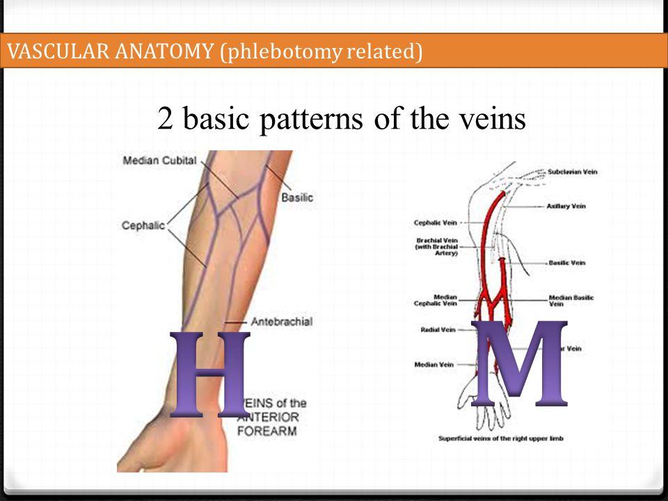 VASCULAR ANATOMY (phlebotomy related) 2 basic patterns of the veins