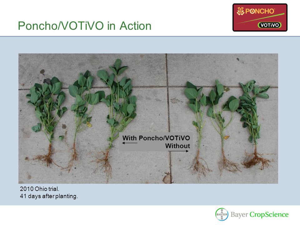 Poncho/VOTiVO in Action With Poncho/VOTiVO Without 2010 Ohio trial. 41 days after planting.