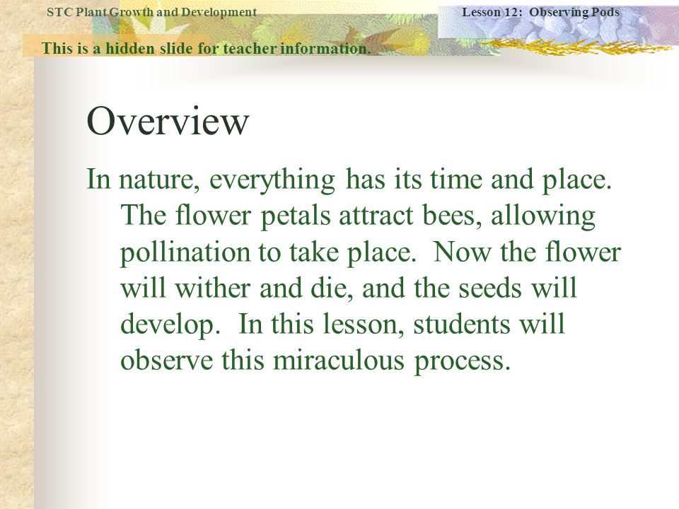 Lesson Objectives  Students observe the development of the fertilized pods between Day 17 and Day 35.