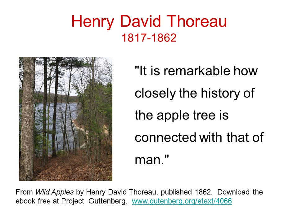 Henry David Thoreau 1817-1862 It is remarkable how closely the history of the apple tree is connected with that of man. From Wild Apples by Henry David Thoreau, published 1862.