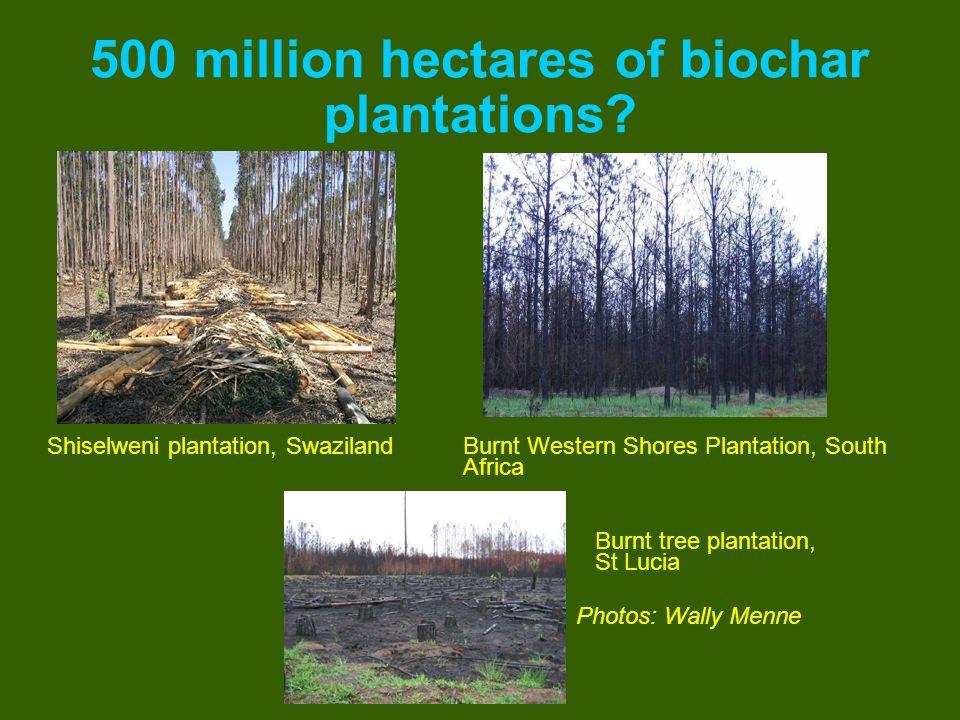 500 million hectares of biochar plantations? Shiselweni plantation, SwazilandBurnt Western Shores Plantation, South Africa Burnt tree plantation, St L