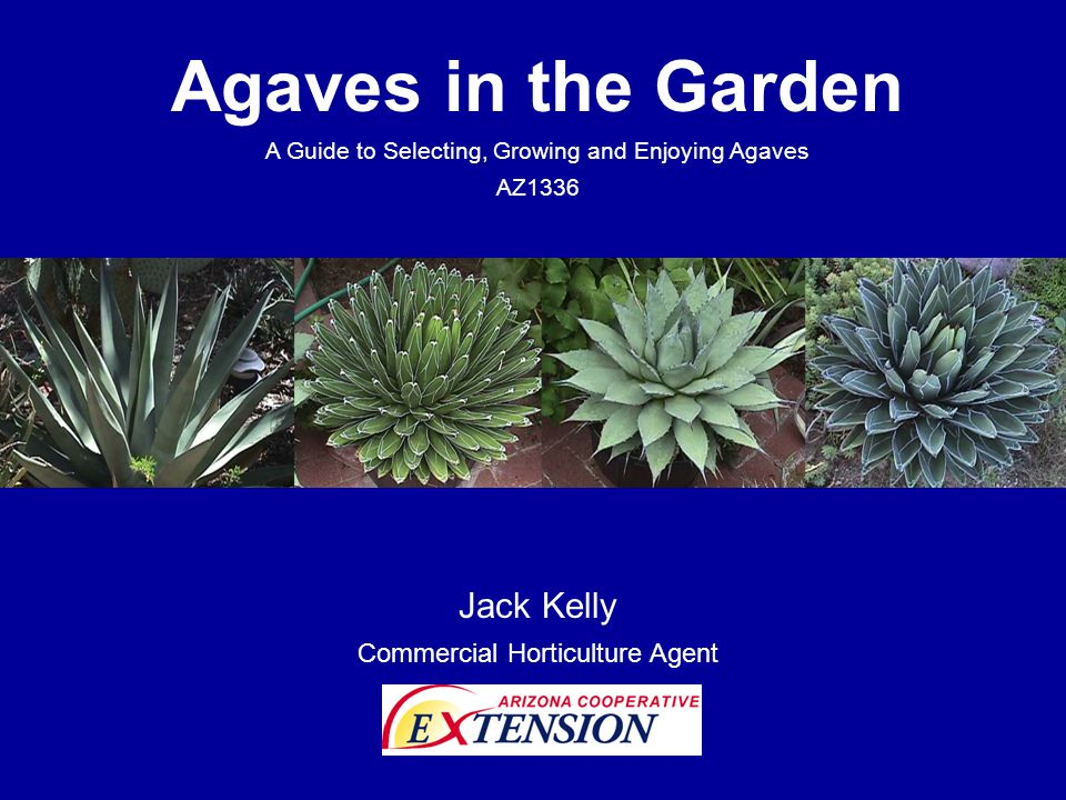 Agaves in the Garden A Guide to Selecting, Growing and Enjoying Agaves AZ1336 Jack Kelly Commercial Horticulture Agent