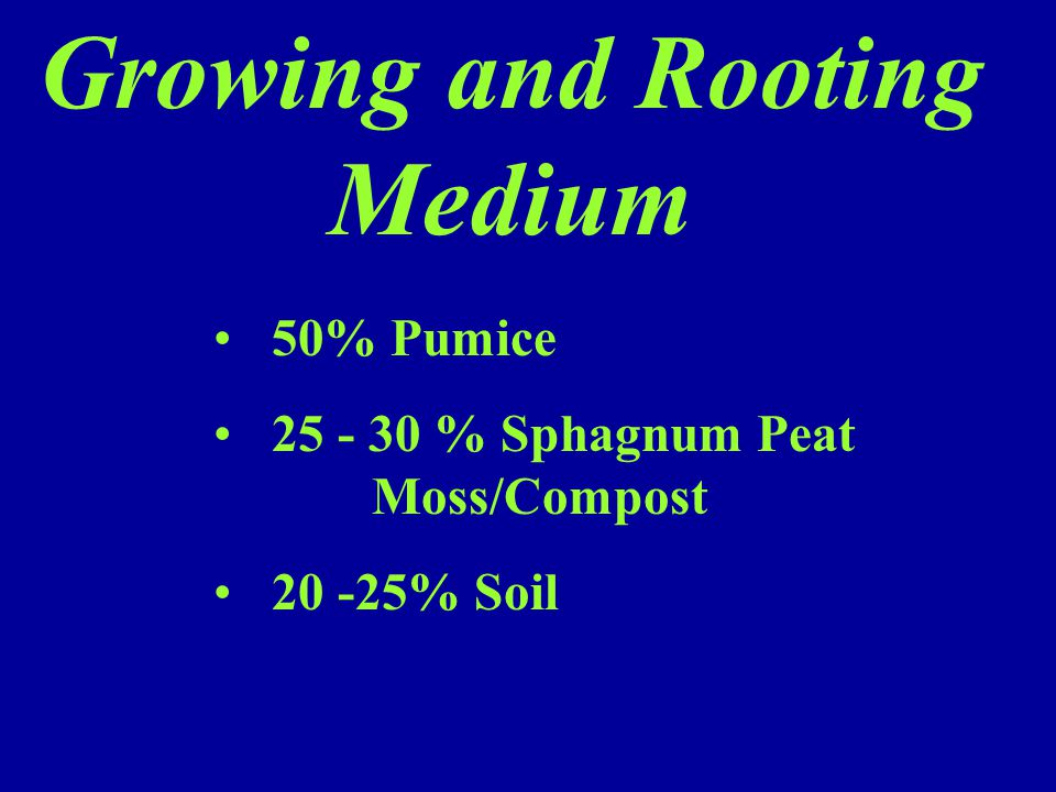 Growing and Rooting Medium 50% Pumice 25 - 30 % Sphagnum Peat Moss/Compost 20 -25% Soil