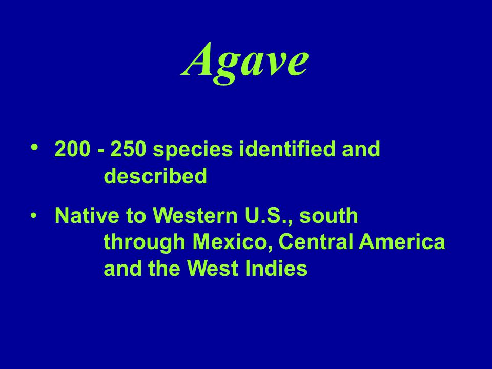 Agave 200 - 250 species identified and described Native to Western U.S., south through Mexico, Central America and the West Indies