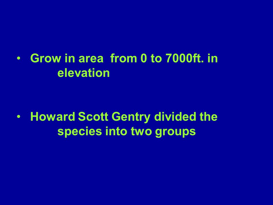 Grow in area from 0 to 7000ft. in elevation Howard Scott Gentry divided the species into two groups