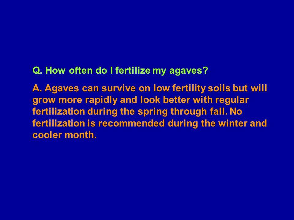 Q.How often do I fertilize my agaves. A.