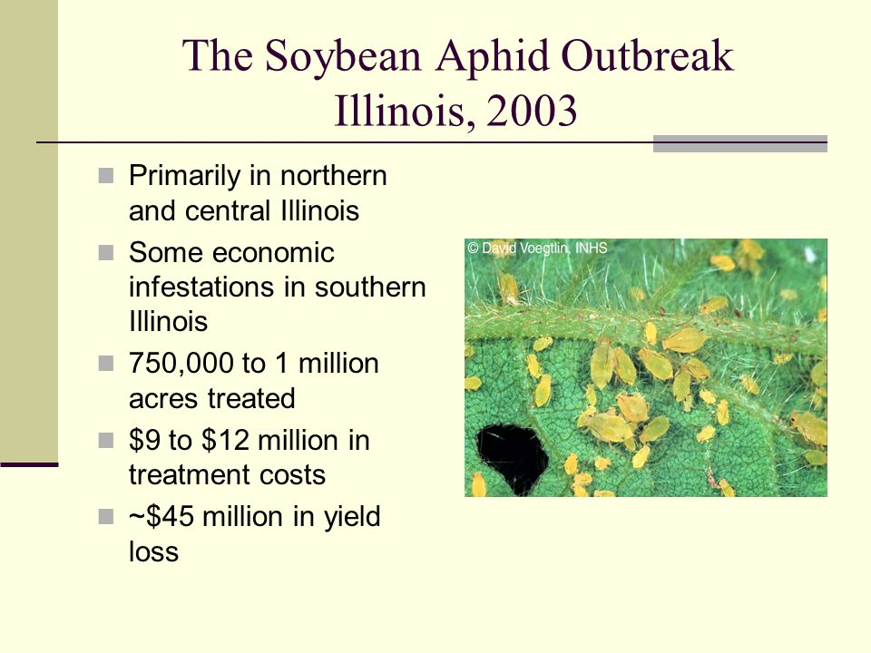 The Soybean Aphid Outbreak Illinois, 2003 Primarily in northern and central Illinois Some economic infestations in southern Illinois 750,000 to 1 million acres treated $9 to $12 million in treatment costs ~$45 million in yield loss