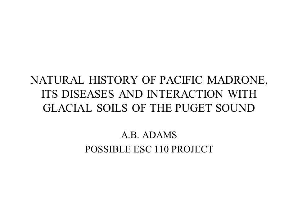 NATURAL HISTORY OF PACIFIC MADRONE, ITS DISEASES AND INTERACTION WITH GLACIAL SOILS OF THE PUGET SOUND A.B.