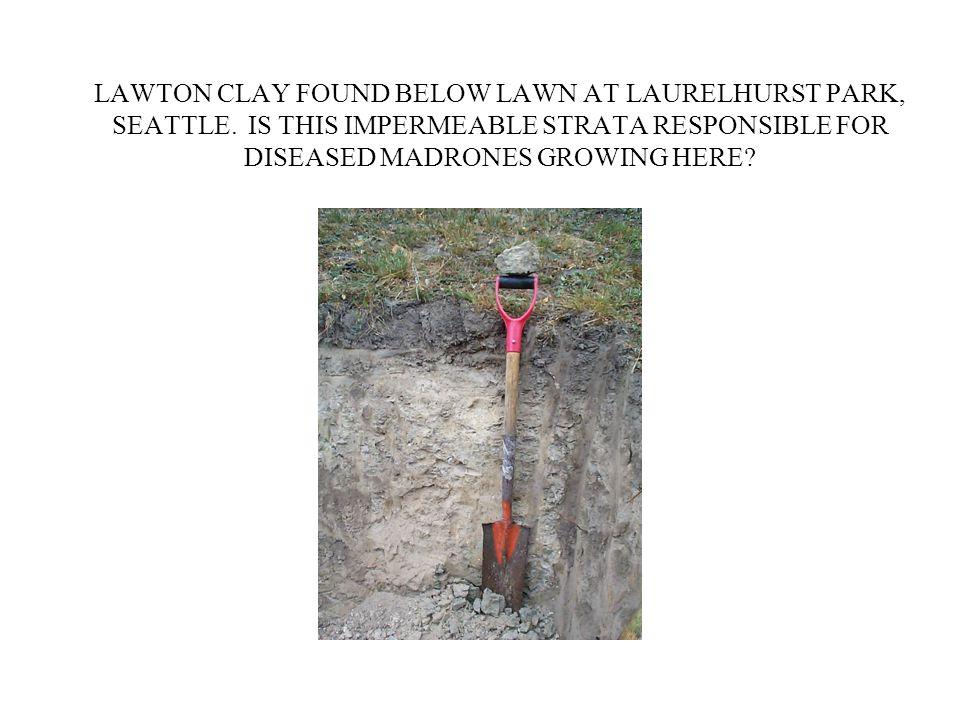 LAWTON CLAY FOUND BELOW LAWN AT LAURELHURST PARK, SEATTLE.