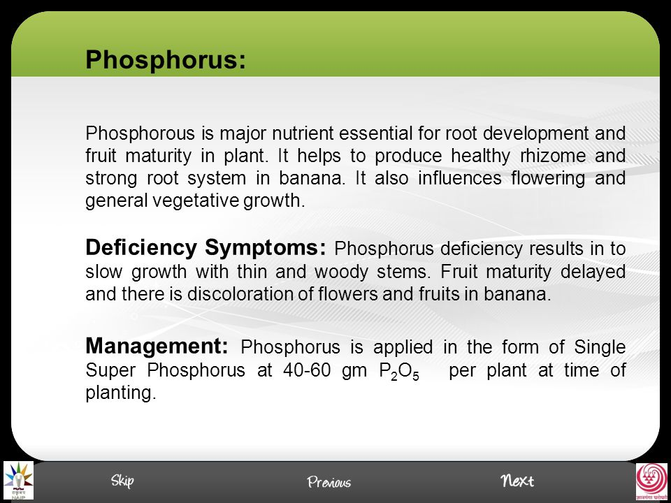 Phosphorous is major nutrient essential for root development and fruit maturity in plant.