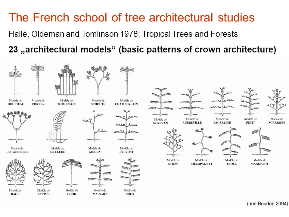 "The French school of tree architectural studies Hallé, Oldeman and Tomlinson 1978: Tropical Trees and Forests 23 ""architectural models (basic patterns of crown architecture)"