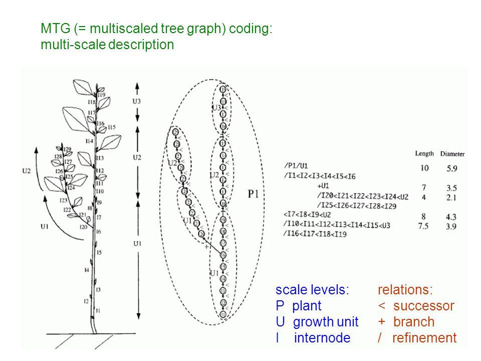 scale levels: P plant U growth unit I internode relations: < successor + branch / refinement MTG (= multiscaled tree graph) coding: multi-scale descri