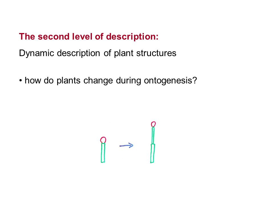 The second level of description: Dynamic description of plant structures how do plants change during ontogenesis?