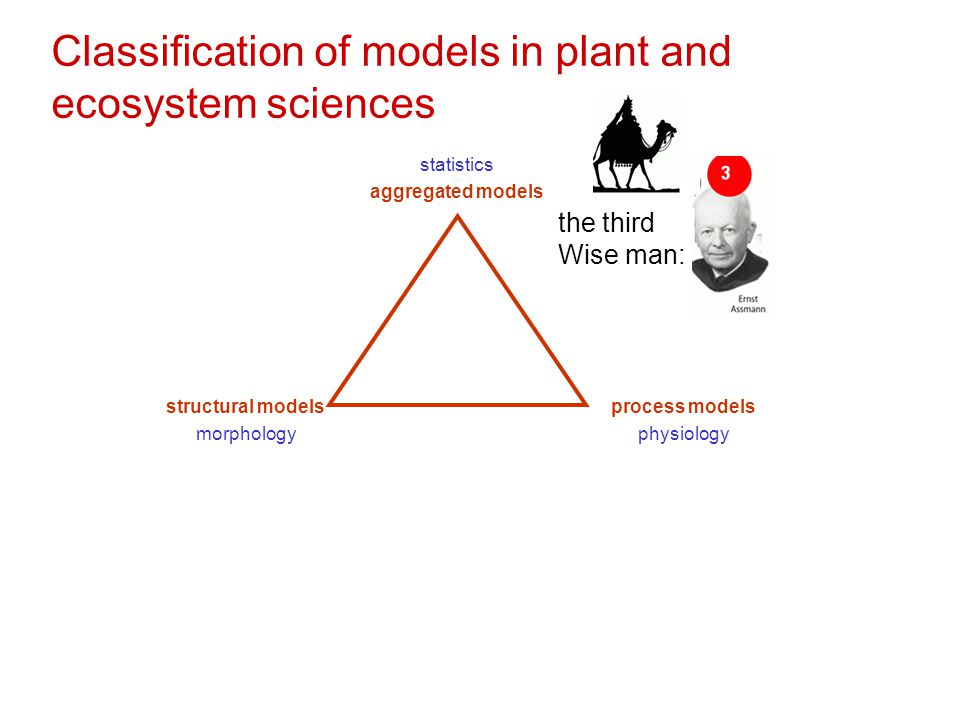 Classification of models in plant and ecosystem sciences statistics aggregated models structural models morphology process models physiology the third