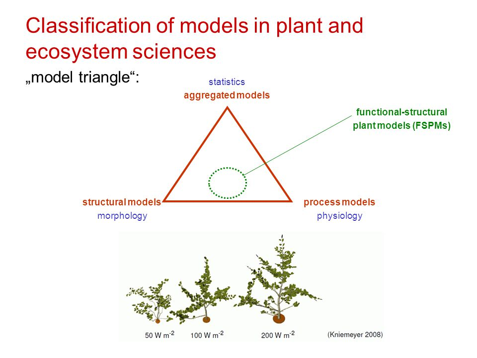 "Classification of models in plant and ecosystem sciences ""model triangle : statistics aggregated models structural models morphology process models physiology functional-structural plant models (FSPMs)"