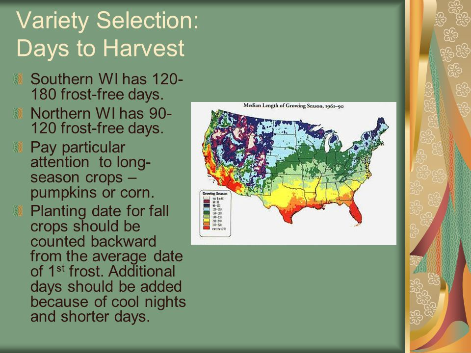 Variety Selection: Days to Harvest Southern WI has 120- 180 frost-free days. Northern WI has 90- 120 frost-free days. Pay particular attention to long