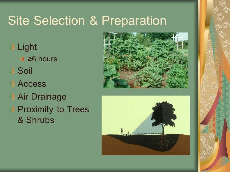 Site Selection & Preparation Light ≥6 hours Soil Access Air Drainage Proximity to Trees & Shrubs