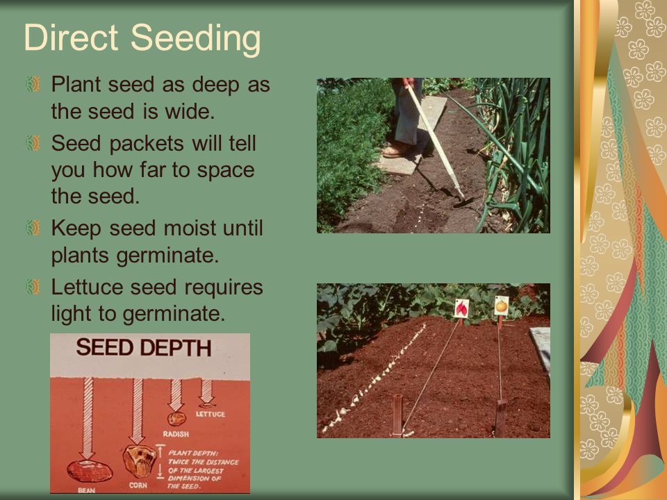 Direct Seeding Plant seed as deep as the seed is wide. Seed packets will tell you how far to space the seed. Keep seed moist until plants germinate. L