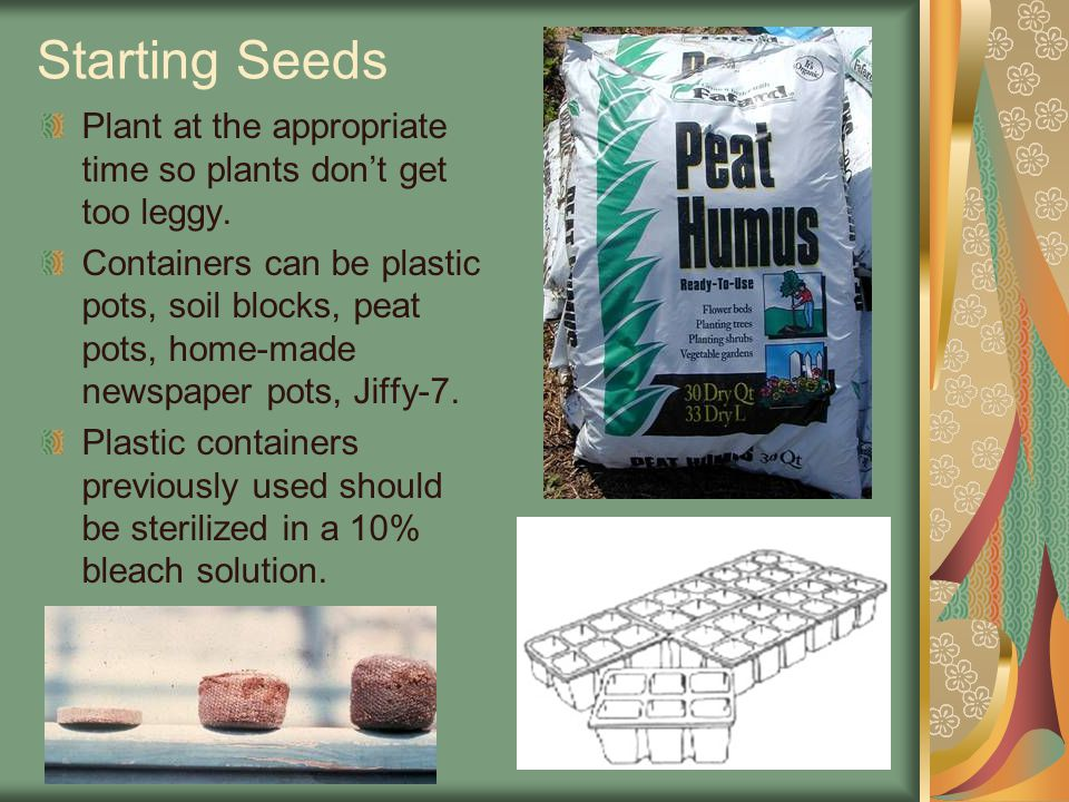Starting Seeds Plant at the appropriate time so plants don't get too leggy.