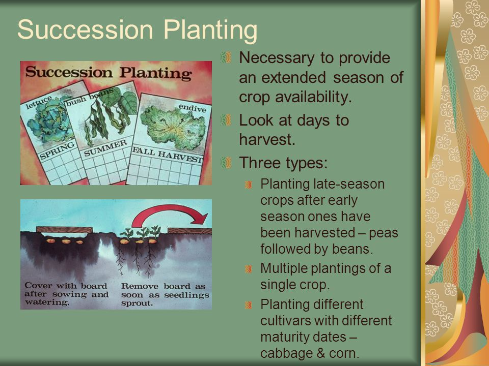 Succession Planting Necessary to provide an extended season of crop availability.