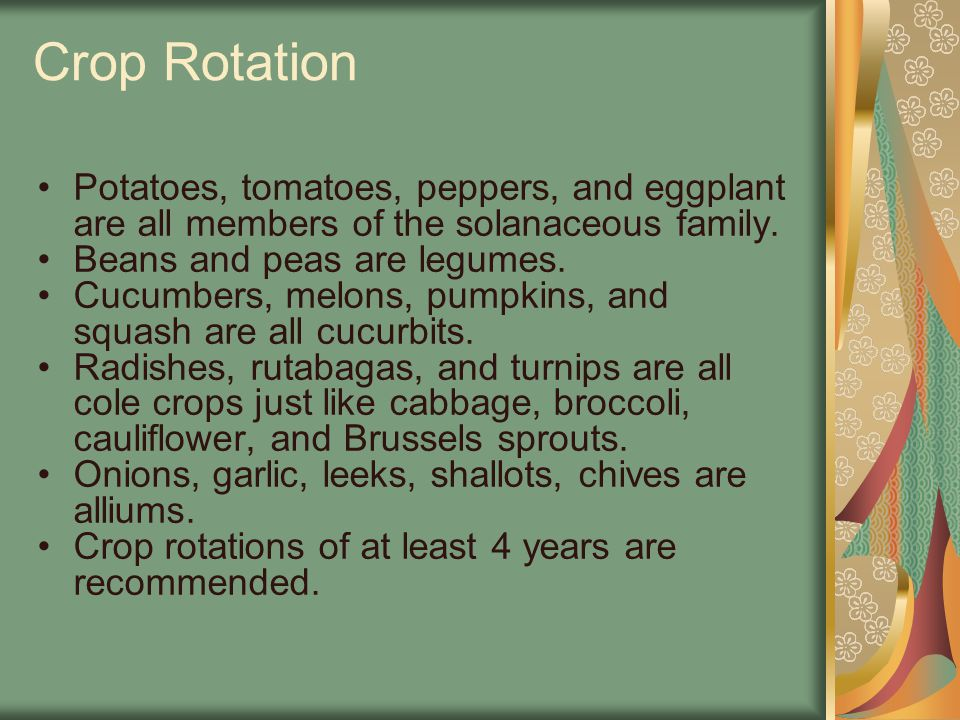 Crop Rotation Potatoes, tomatoes, peppers, and eggplant are all members of the solanaceous family. Beans and peas are legumes. Cucumbers, melons, pump