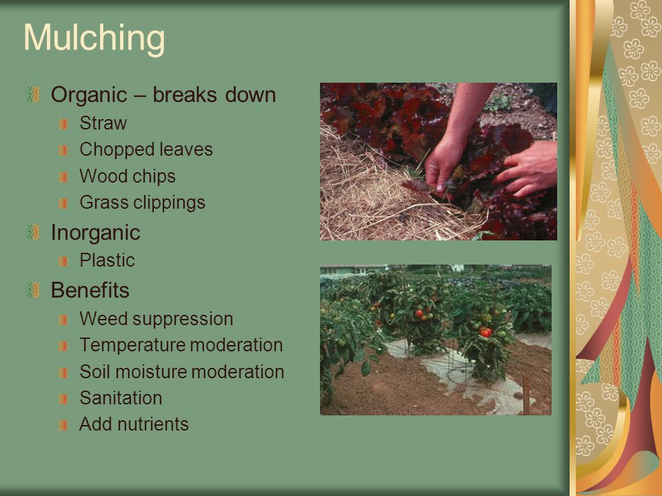 Mulching Organic – breaks down Straw Chopped leaves Wood chips Grass clippings Inorganic Plastic Benefits Weed suppression Temperature moderation Soil moisture moderation Sanitation Add nutrients