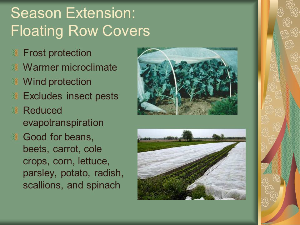 Season Extension: Floating Row Covers Frost protection Warmer microclimate Wind protection Excludes insect pests Reduced evapotranspiration Good for beans, beets, carrot, cole crops, corn, lettuce, parsley, potato, radish, scallions, and spinach