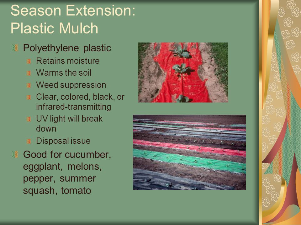 Season Extension: Plastic Mulch Polyethylene plastic Retains moisture Warms the soil Weed suppression Clear, colored, black, or infrared-transmitting UV light will break down Disposal issue Good for cucumber, eggplant, melons, pepper, summer squash, tomato