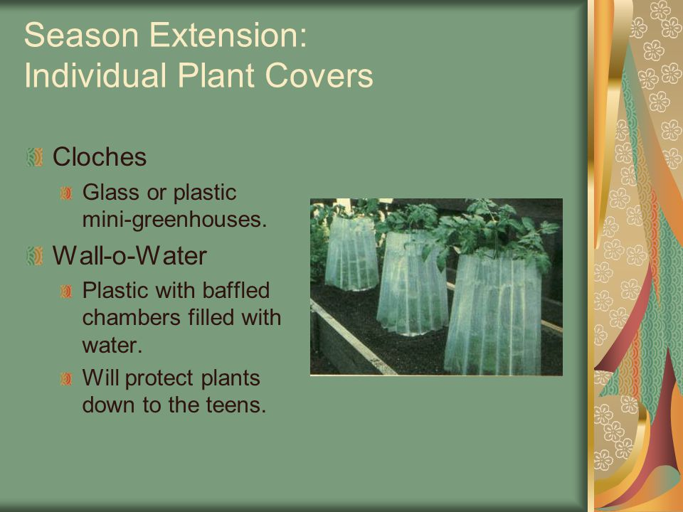 Season Extension: Individual Plant Covers Cloches Glass or plastic mini-greenhouses.