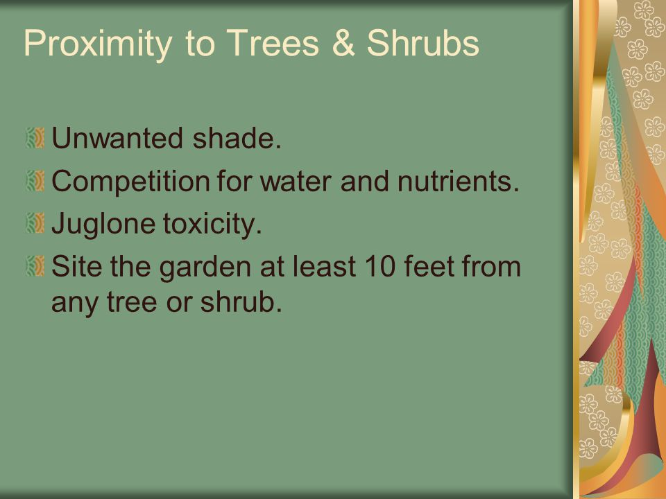 Proximity to Trees & Shrubs Unwanted shade. Competition for water and nutrients. Juglone toxicity. Site the garden at least 10 feet from any tree or s