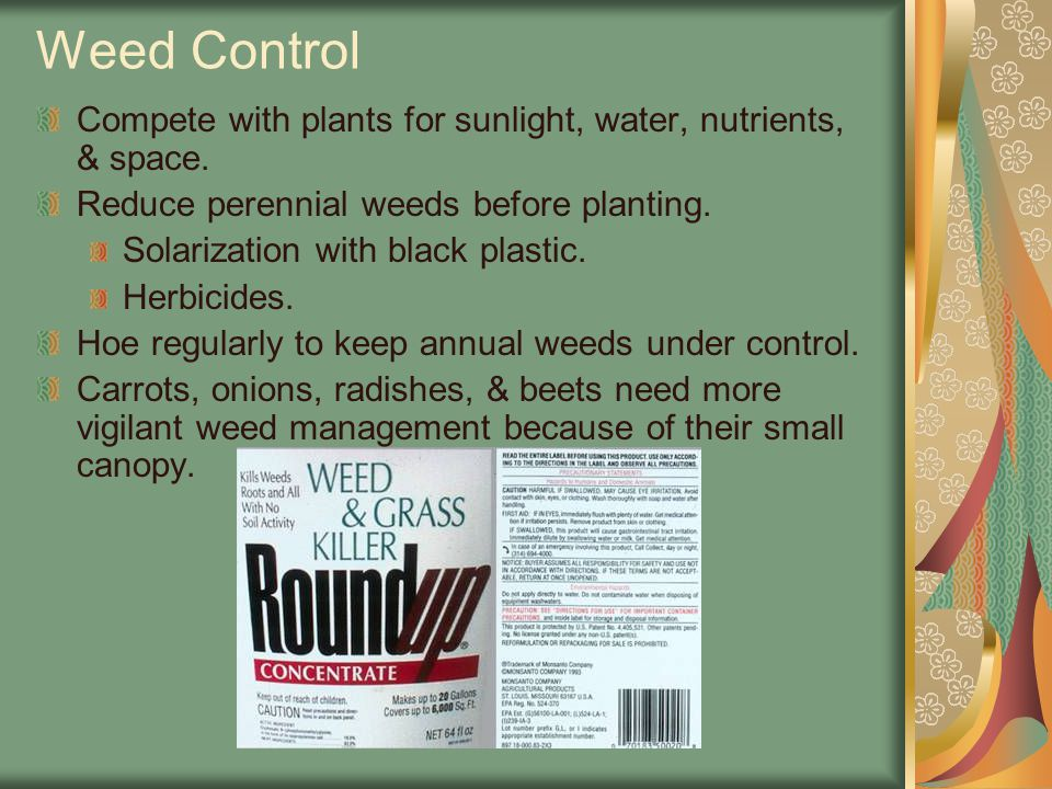 Weed Control Compete with plants for sunlight, water, nutrients, & space. Reduce perennial weeds before planting. Solarization with black plastic. Her