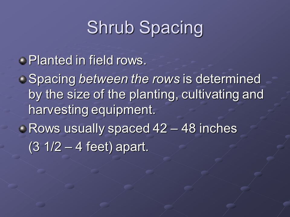 Shrub Spacing Planted in field rows.