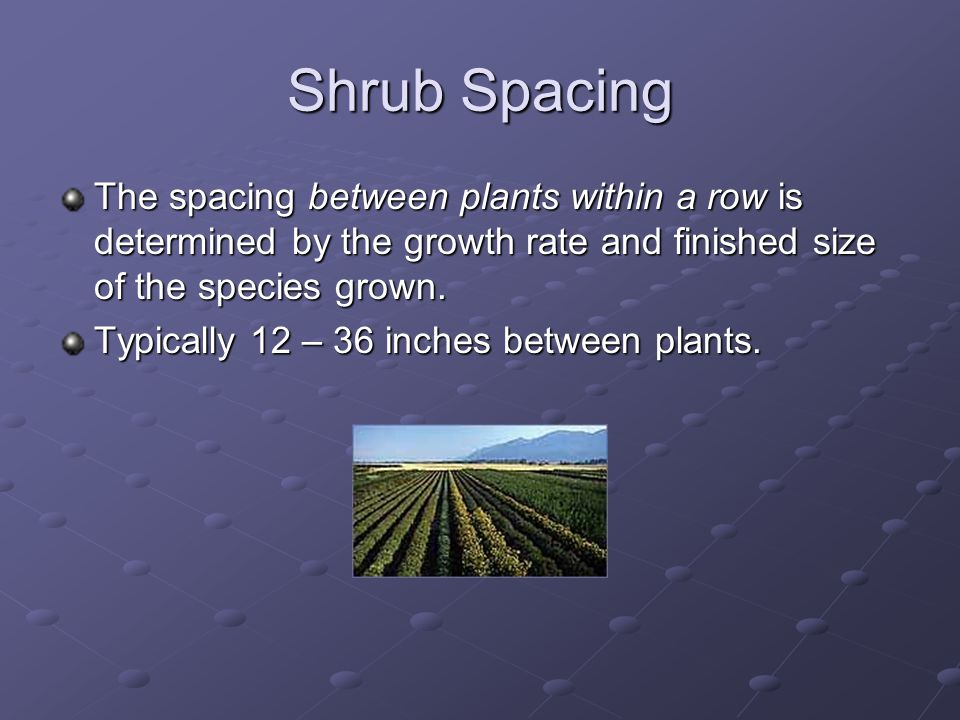 Shrub Spacing The spacing between plants within a row is determined by the growth rate and finished size of the species grown.