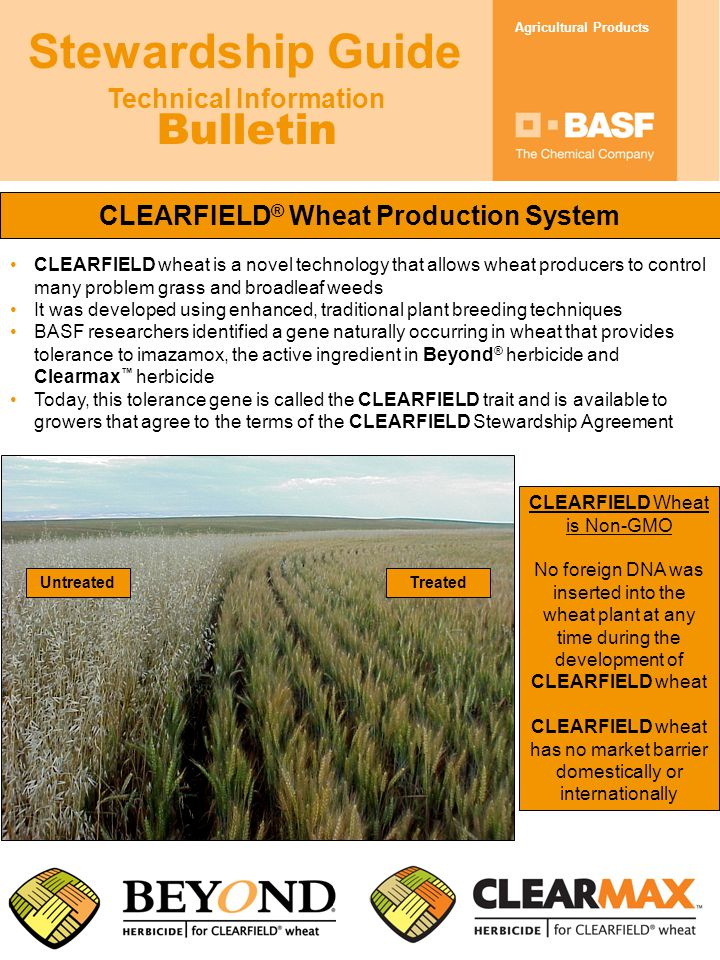 Technical Information Bulletin Agricultural Products Stewardship Guide CLEARFIELD ® Wheat Production System CLEARFIELD wheat is a novel technology that allows wheat producers to control many problem grass and broadleaf weeds It was developed using enhanced, traditional plant breeding techniques BASF researchers identified a gene naturally occurring in wheat that provides tolerance to imazamox, the active ingredient in Beyond ® herbicide and Clearmax ™ herbicide Today, this tolerance gene is called the CLEARFIELD trait and is available to growers that agree to the terms of the CLEARFIELD Stewardship Agreement CLEARFIELD Wheat is Non-GMO No foreign DNA was inserted into the wheat plant at any time during the development of CLEARFIELD wheat CLEARFIELD wheat has no market barrier domestically or internationally UntreatedTreated