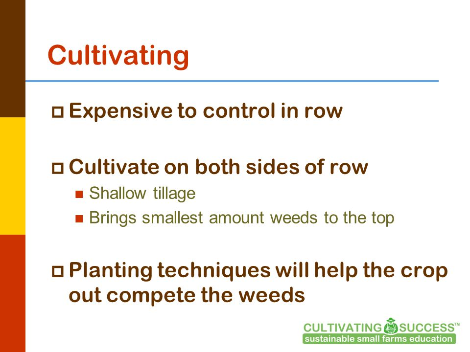 Cultivating  Expensive to control in row  Cultivate on both sides of row Shallow tillage Brings smallest amount weeds to the top  Planting techniques will help the crop out compete the weeds