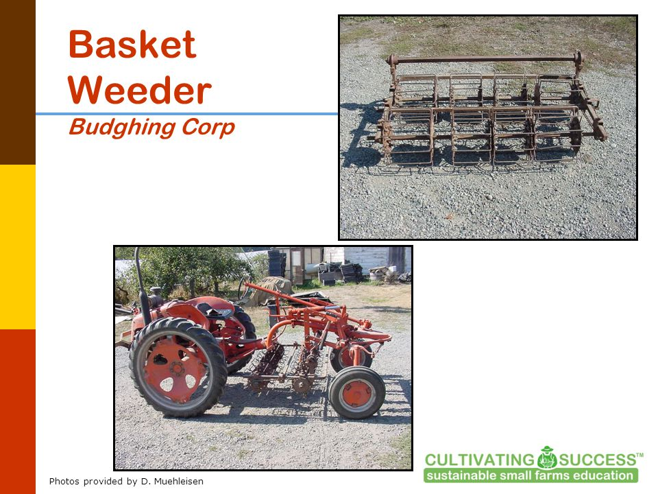 Basket Weeder Budghing Corp Photos provided by D. Muehleisen
