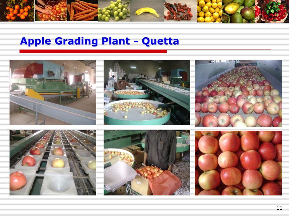 11 Apple Grading Plant - Quetta Apple Grading Plant - Quetta