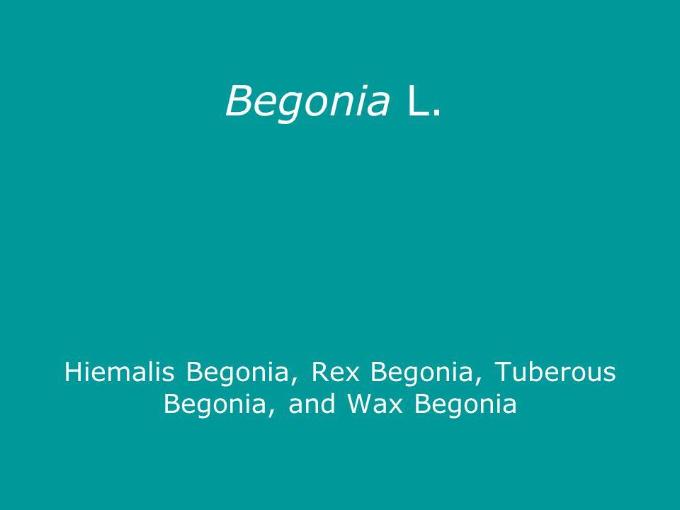Begonia L. Hiemalis Begonia, Rex Begonia, Tuberous Begonia, and Wax Begonia