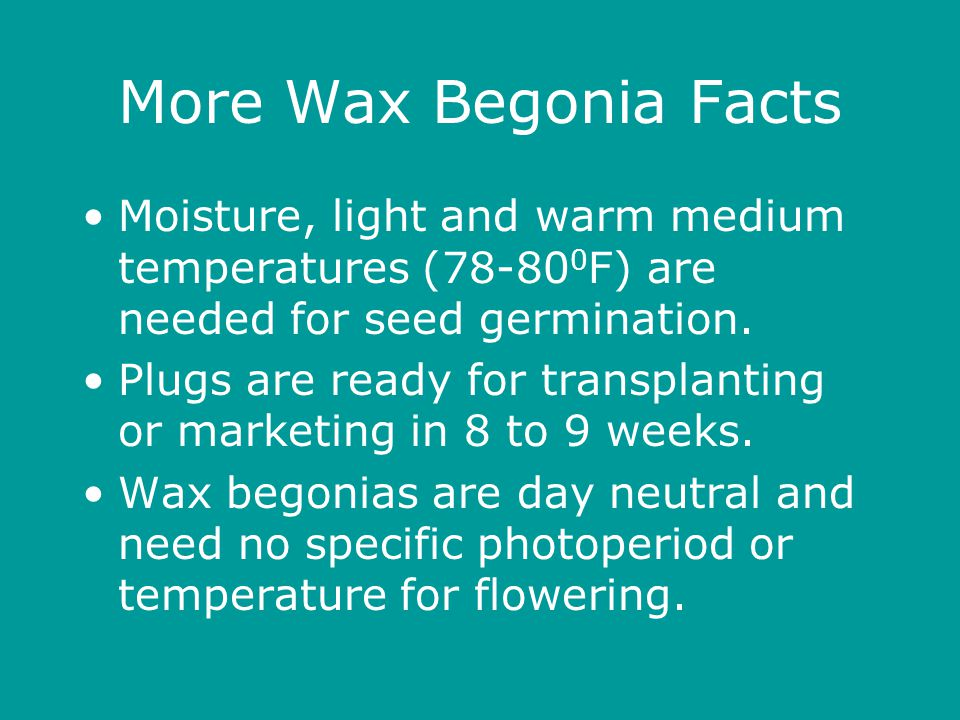 More Wax Begonia Facts Moisture, light and warm medium temperatures (78-80 0 F) are needed for seed germination.